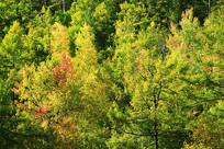 金秋密林风景