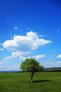 绿色原野风景