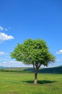 绿色原野一棵树