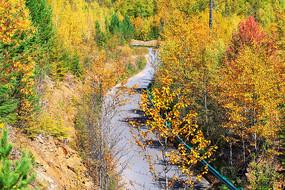 茂密林海公路秋色