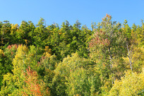 茂密林海秋景