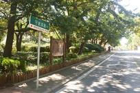 青岛八大关宁武关路街景