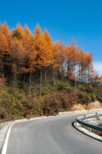 巫山梨子坪森林公园道路