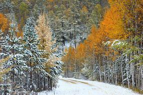 彩林山路秋雪