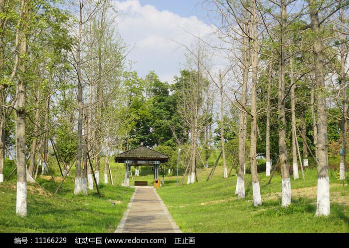 成都桂溪生态公园-健身道和亭图片