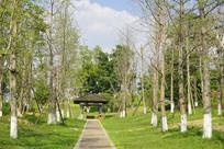 成都桂溪生态公园-健身道和亭