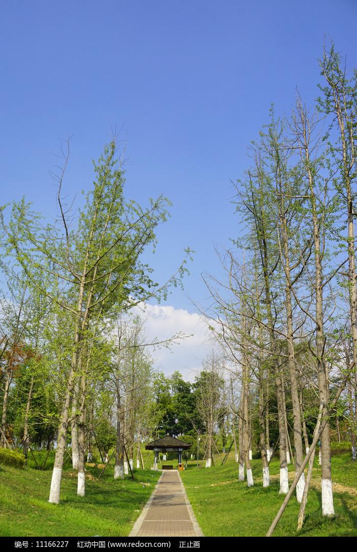 成都桂溪生态公园绿地图片