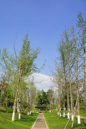 成都桂溪生态公园绿地