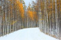 大兴安岭林区彩林山路雪景