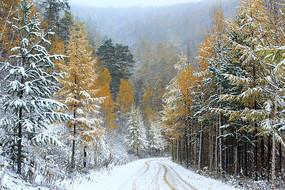 大兴安岭秋季雪林山路