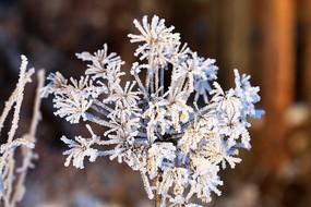 冬季花草霜花