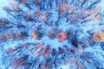 航拍雪原红柳树林雾凇