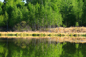湖泊茂密树林风光