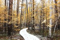 岭林区秋季彩林小路