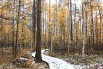 林间小路秋雪