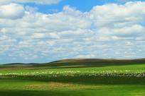 绿色草地风光