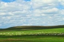 绿色牧场风光