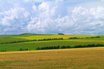 绿色农田防护林