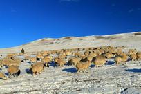 内蒙古呼伦贝尔草原冬牧