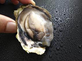 青岛新鲜生蚝肉