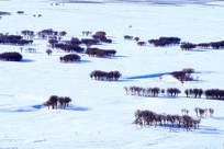 雪野雪原树林