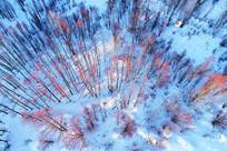 雪原红柳树林雾凇