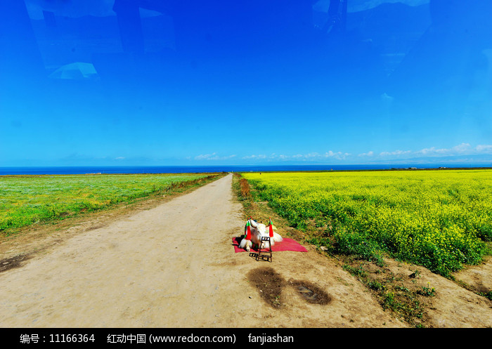 青海湖油菜花花海图片