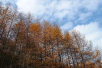 巫山梨子坪林场蓝天白云
