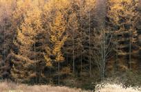 巫山梨子坪林场茂密森林