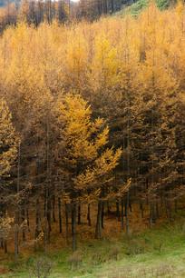 巫山梨子坪秋季密林
