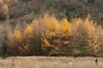 重庆巫山梨子坪森林公园