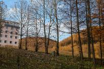 巫山梨子坪林场树林山坡