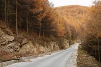 巫山梨子坪林场蜿蜒的公路