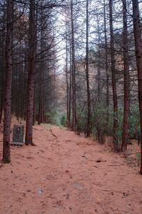 巫山梨子坪情人谷密林