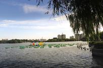 西瓜灯广场湖景