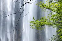 特写白果树瀑布