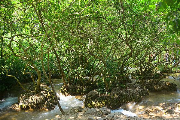 荔波小七孔林间的山涧溪水