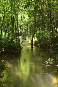 荔波小七孔林间小河