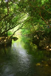 荔波小七孔林间溪流