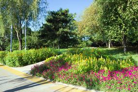公园鲜花小路
