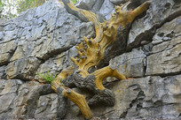 荔波小七孔岩壁老树雕塑
