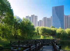绿荫下的观景长廊