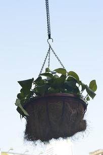 吊着的盆栽植物
