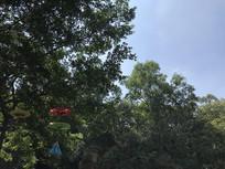 广州莲花山公园绿树