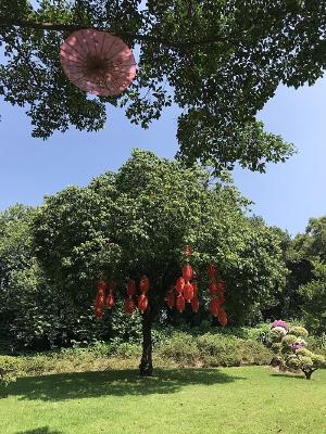 挂着红灯笼的树
