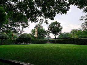 草地绿树素材