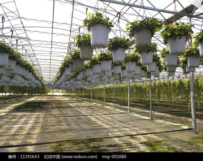 现代花卉大棚图片