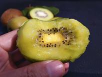 种植的绿心猕猴桃