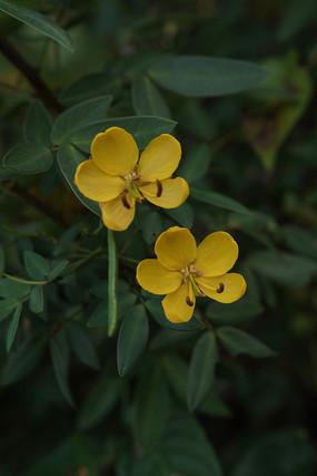 秋天綻放的黃色花朵