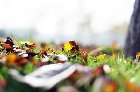 仲秋的落叶